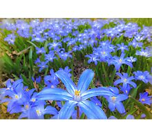 Blue bed of happiness Photographic Print