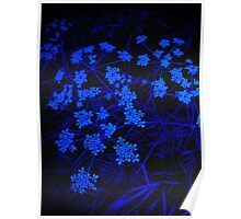 Blue Lace Poster