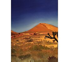 Joshua Tree Photographic Print