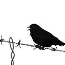 Blackbird on Barbed Wire - Black and White Study by Ryan Houston