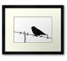 Blackbird on Barbed Wire - Black and White Study Framed Print