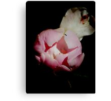 Peony Unbloomed Canvas Print