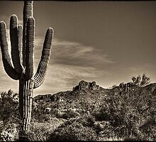 Saguaro in Sepia by Roger Passman