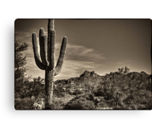 Saguaro in Sepia Canvas Print