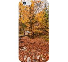 Autumn colors in the wood  iPhone Case/Skin