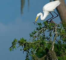 Egret eating dragonfly by Bonnie T.  Barry