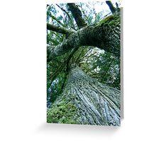 Haldir's Roost Greeting Card
