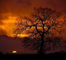 Morning Light by Darren Burroughs