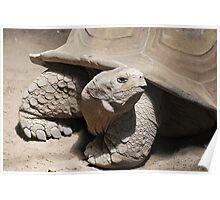 Aldabra Tortoise -horizontal- Poster