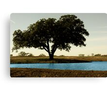 Tree by Pond Canvas Print