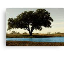 Tree by Pond Canvas Print