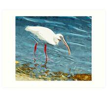 White Ibus at Shoreline Abstract Impressionism Art Print