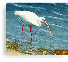 White Ibus at Shoreline Abstract Impressionism Canvas Print