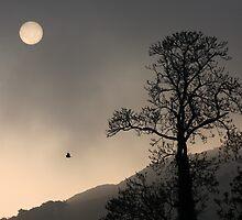 Sunrise Haiku by Steiner62