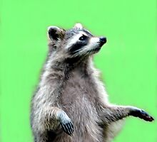 Ricky The Racoon by Kathleen Struckle
