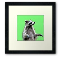 Ricky The Racoon Framed Print