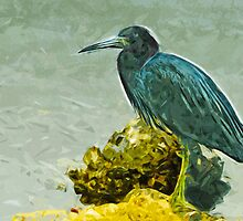 Little Blue Heron at Waters Edge Abstract Impressionism by pjwuebker