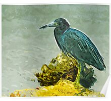 Little Blue Heron at Waters Edge Abstract Impressionism Poster
