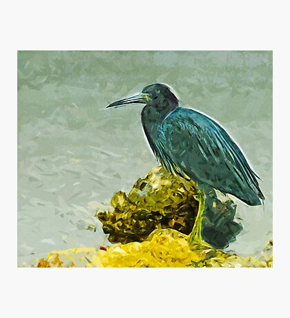 Little Blue Heron at Waters Edge Abstract Impressionism Photographic Print