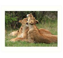 Lions On The Masai Mara Art Print