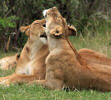 Lions On The Masai Mara by aidan  moran
