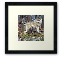 Timber Wolf on the Alert Framed Print