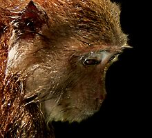 Long Tail Macaque III  by salsbells69