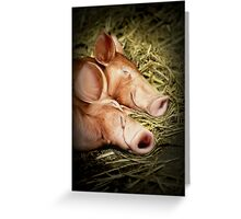 Perfectly Peaceful Piglets Greeting Card