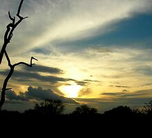 Kruger Sunset by Natalie Broome