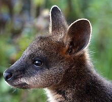 Wallaby Joey by Barrie Collins