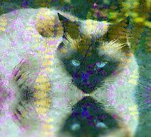Catnip Queen by Zoe Marlowe