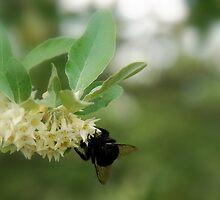 Flowers & the Bee... by LindaR