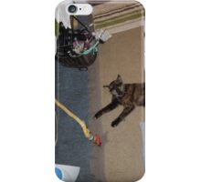 COLD BLOODED CAT iPhone Case/Skin