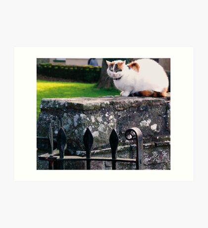 Church Yard Cat Art Print