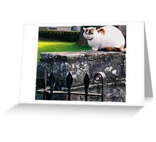 Church Yard Cat Greeting Card