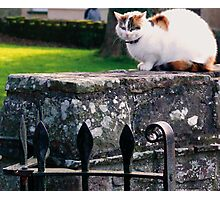 Church Yard Cat Photographic Print