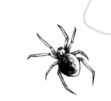 Spiderweb Sticker