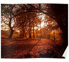 An English Woodland at Sunset Poster