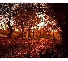 An English Woodland at Sunset Photographic Print