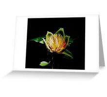 Maple Flower Greeting Card