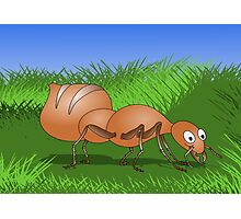 Ant smiling in tall green grass Photographic Print