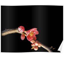 Montello Blossoms Poster