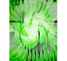 Key Lime Photographic Print