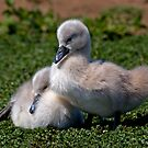 Ugly Ducklings? by Krys Bailey