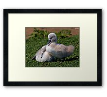 Ugly Ducklings? Framed Print