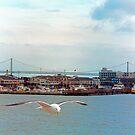 Waterfront by Tom Gomez