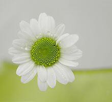 Daisy vert by cherryannette