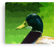 Male Mallard Duck Abstract Impressionism Canvas Print
