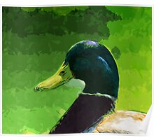 Male Mallard Duck Abstract Impressionism Poster