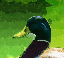 Male Mallard Duck Abstract Impressionism by pjwuebker